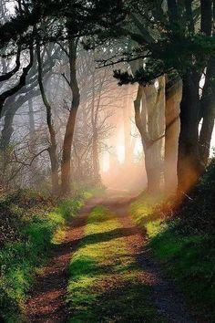 Godolphin woods Cornwall England
