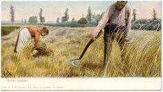 18048 Het maaien en binden van koren...   Zoek resultaat   Fotohistorisch