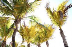 #MyDream is beach, sun, palm trees and the ocean breeze! #HappyTuesday  #MiSueñoEs playa, sol, palmeras y la brisa del mar #FelizMartes