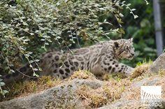 Woodland Park Zoo Blog
