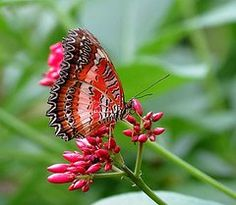 MTBobbins Photography - Butterfly on Flowers