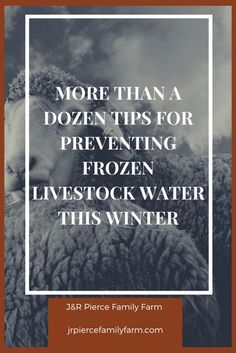 Winter is coming - or it's already here in some spots. Prevent your water troughs from getting icy (and ensure the health of your animals) by considering some of these tips to prevent frozen waterers. #livestock #homesteading #farming #raisinganimals #r Raising Cattle, Raising Ducks, Raising Rabbits, Raising Goats, Herb Garden Design, Diy Herb Garden, Garden Ideas, Building Raised Beds, Raised Garden Beds