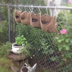 Chain link fence gardening