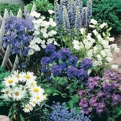 Blues, whites and purples....makes for a beautiful perenial flower bed!