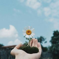 I grew a flower that can't be bloomed in a dream that can't come true. Hand Flowers, Little Flowers, Love Flowers, Beautiful Flowers, Flower Aesthetic, Blue Aesthetic, Aesthetic Photo, Hand Photography, Creative Photography