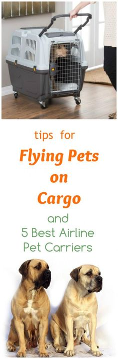 Spiffy Pet Care Tips. Tips for flying with your dog or cat in cargo together with our recommendations for the best pet cargo carriers for airline travel. Flying With Pets, Flying Dog, Dog Care Tips, Pet Care, Airline Pet Carrier, Dog Travel, Airline Travel, Best Airlines, Dog Pee