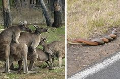 16 Times Australian Animals Just Took Things Way Too Far