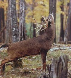 https://missouriwhitetail.files.wordpress.com/2013/10/photo-33.jpg