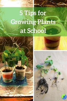 45 Best Outdoor Learning Images In 2020 Outdoor Learning