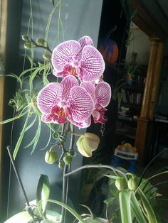 Orchids from my love :)
