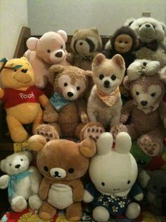 Can you find which one is a real dog not a doll? His name is Shunsuke! :)