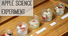 Explore the effect of different liquids on apple slices, a science experiment for preschool, pre-k, and kindergarten