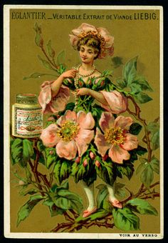Liebig Beef Extract, Belgian issue, 1888. Eglantier - Wild or Dog rose