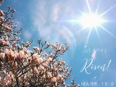 He is risen! Mark 16:6