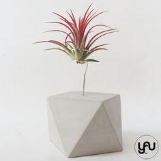 Marturii geometrice si plante aeriene | YaU Concept BLOG