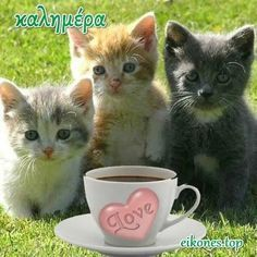 Πανέμορφα γατάκια σας λένε όμορφες καλημέρες! - eikones top Good Morning, Mugs, Animals, Amazing, Buen Dia, Animales, Bonjour, Animaux, Tumblers