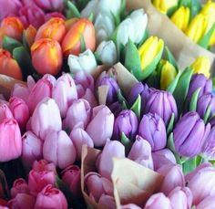 Fresh Flowers, Spring Flowers, Beautiful Flowers, Tulips Flowers, Spring Colors, Colorful Flowers, Pastel Flowers, Parrot Tulips, Beautiful Beautiful