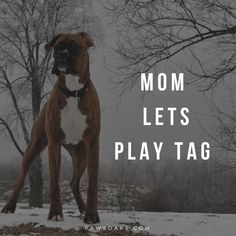 """Outstanding """"boxer pups"""" information is offered on our site. Have a look and you… – dogfunny Boxer Dog Breed, Boxer Dog Puppy, Brindle Boxer, Boxer Mom, Black Boxer Dog, Daily Activities, Memory Books, Dog Walking, Training Tips"""