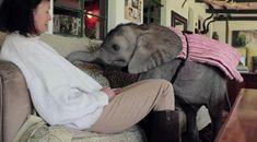 I want a pet baby elephant! | source: imgur.com