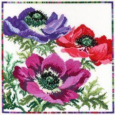 Garden Flowers: Anemone