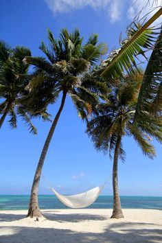 A coconut-fringed beach in Belize....