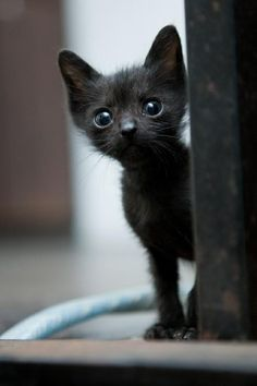What a sweet little creature !!!