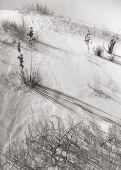 Ansel Adams Dunes, Hazy Sun, White Sands National Monument, New Mexico, 1941 Gelatin Silver 10 × 8 in × cm Black And White Landscape, Black N White Images, Black White, Famous Photographers, Landscape Photographers, Sierra Nevada, Vintage Photography, Nature Photography, Stunning Photography