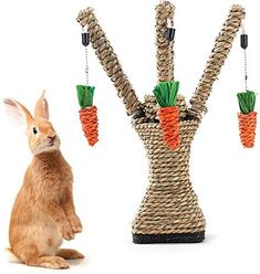 Rabbit Toys, Pet Rabbit, Pig Teeth, Animal Activities, Activity Toys, Teeth Cleaning, Guinea Pigs, Plant Hanger, Fur Babies
