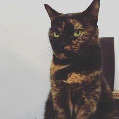 何で怒ったの? 為什麼看起來生氣了 #猫部 #さびねこ #さびねこ部