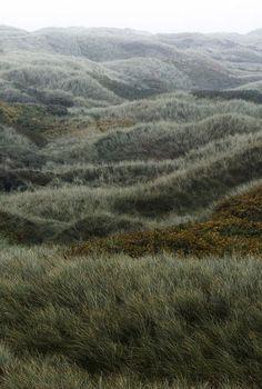 Wild prairie grasses #prairie