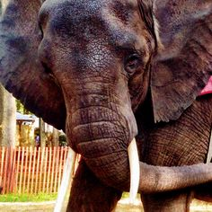 Please sign!! Urge Wise County Fairgrounds officials to cancel Nosey's appearances right away and to pledge never to host her again!