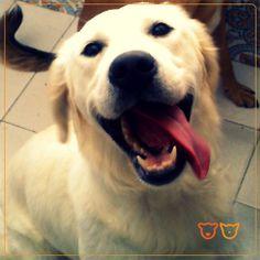 Zoe Registe-se também no nosso site e partilhe connosco as fotos do seu animal de estimação! www.veterinario24horas.pt