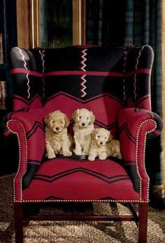 Puppies cozy up in a Ralph Lauren Home wingback chair in Vintage Red Algonquin fabric