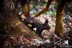 Eichhörnchen im Freien Tierpark Stadt Haag
