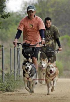 Urban dog mushing -- turns out Dharma's a natural at it! #itsathing