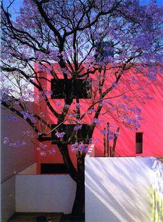 #pink Casa Gilardi. Luis Barragán