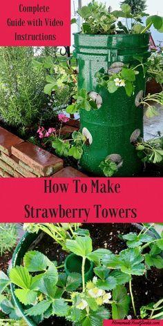 How To Make Strawber Vegetable Garden For Beginners Gardening