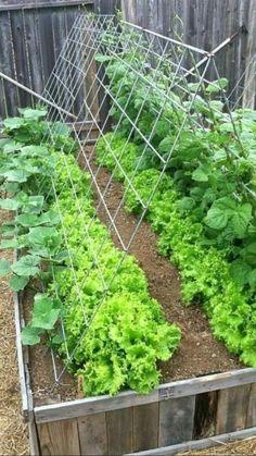 Flower Festival, Vegetable Garden Design, Small Gardens, Growing Plants, Dream Garden, Permaculture, Garden Planning, Garden Paths, Gardening Tips