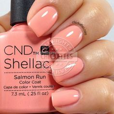 Image result for shellac salmon run