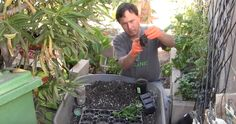 Image: How to test seed viability before planting in the garden