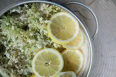 Opskrift på nem og lækkert hjemmelavet hyldeblomstsaft - hylden blomstre og det er nemt at lave egen gode saft af hyldeblomstskærme