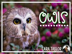 Owls ~ Informational Unit for Primary Learners Nocturnal Animals, Baby Owls, Teaching Ideas, The Unit, Birds, Star, Products, Bird