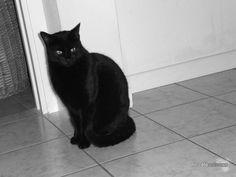 The black - © 2009 - Niccolò Matterazzo
