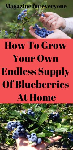 Did you know that among other health benefits blueberries protect against memory loss?