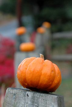 Tip: Add instant fall flair to your fence by putting a tiny pumpkin on each post!