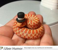 Just a snake in a top hat.