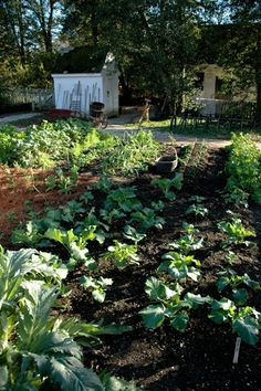 A fall vegetable garden, getting the beds ready this week for: spinach, kale, squash, lettuce blends, garlic, snow peas, snap peas, and chards.