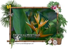 Filipino bamboo photo frame with flower in our garden.  View more photos from the Philippines on our website.  On facebook: www.facebook.com/TheTropicalMystique Website: www.TheTropicalMystique.com  Private short or long term rentals located in the Philippines.