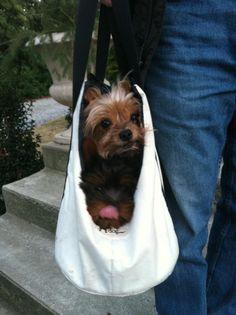 2 Yorkies . . . Doggie Bag