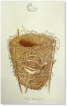 BirdEgg Nest Antique F.O.Morris Nests & Eggs by EarlyRiverGallery The popularity of these endearing prints has made them increasingly scarce, so we are delighted to have prints from the fourth edition published 1892 of Francis Orpen Morris, A Natural History of the Nests & Eggs of British Birds. The inspiration for this book actually came from the renowned English printer Benjamin Fawcett, who approached Morris to write the text when Morris became Vicar of Nafferton.